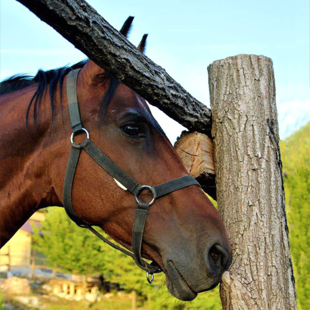 http://horseriding-croatia.com/wp-content/uploads/2019/05/riding_plitvice_01-1000x1000.jpg